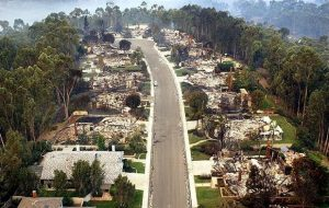 Scripps Ranch Eucalyptus devastation